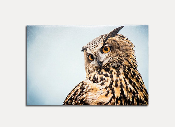 Owl Down - ONLY 1 LEFT