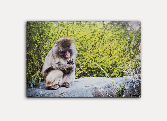 Monkey Rock 3