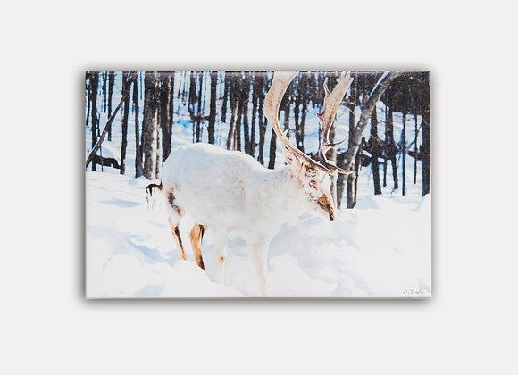 White Elk 1