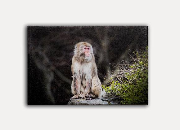 Monkey Rock 1