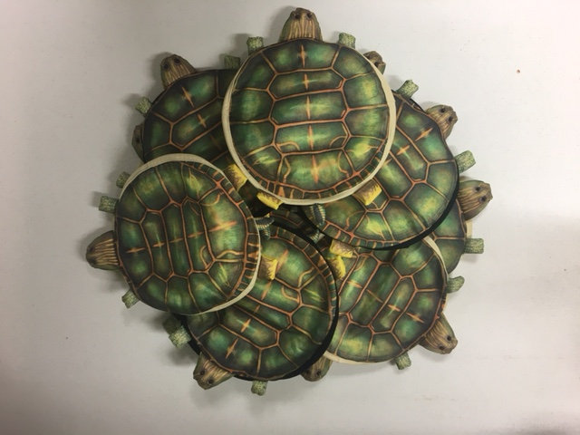 Box of Turtle Hats (10)