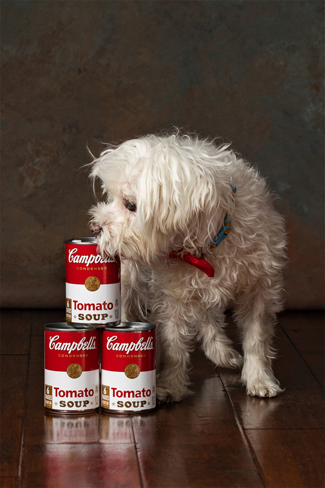 Dog named Andy Warhol posing with tomato soup cans