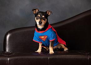 CC_Pet-Dog-P20-Aguilar, Daniela 0P3A5072pf.jpg