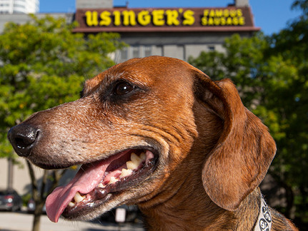 Dogs Around Town – Usinger's Edition!