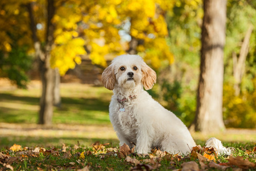dog photography milwaukee