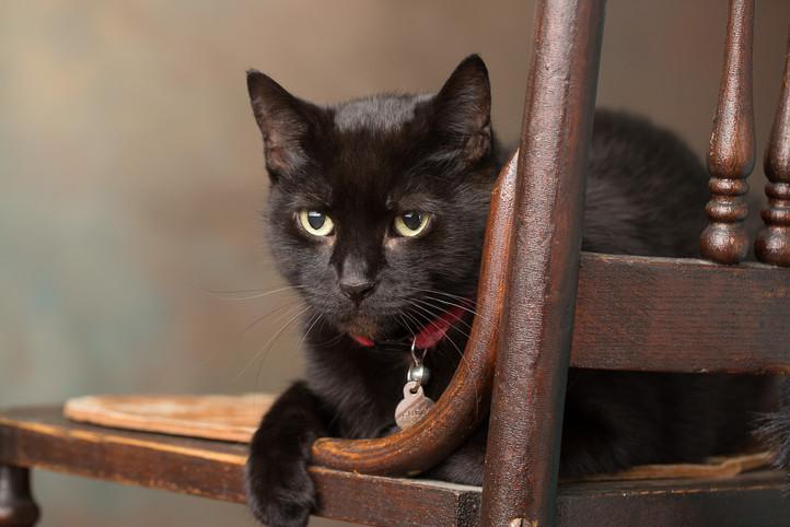 cat photography milwaukee