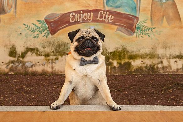 milwaukee dog photography