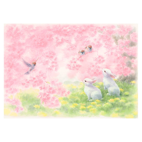 Among the cherry blossoms