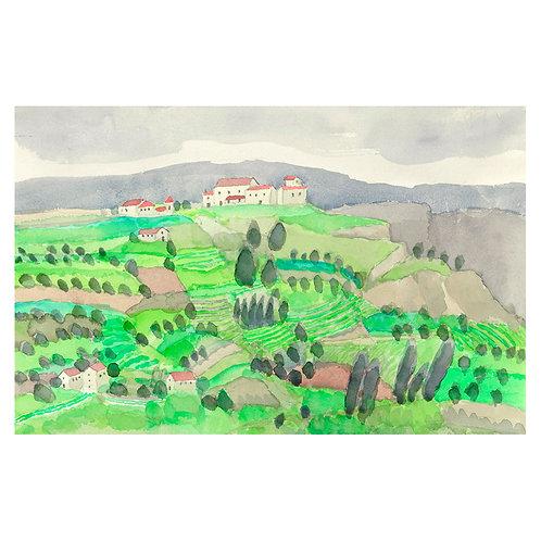 Olive vineyard / Spain