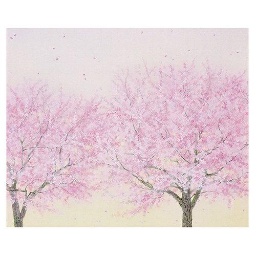 さくらさく/Cherry Blossoms Bloom