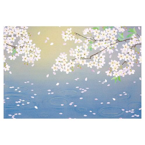 桜舞う/Fluttering Cherry Blossoms
