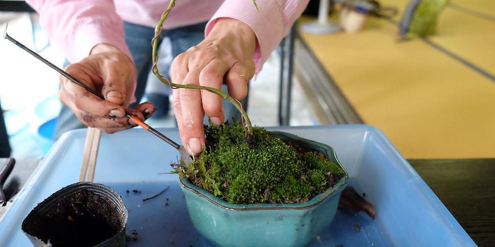 【まるごとマチゴト】ボンサイにコイする ~ミニ盆栽をつくろう~