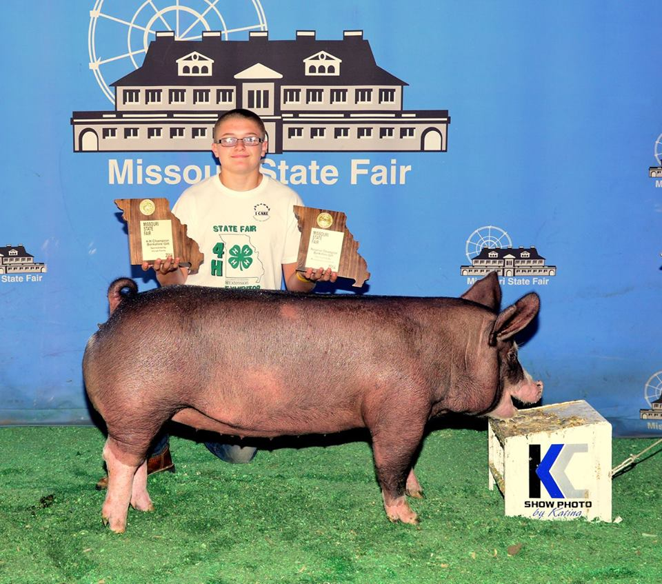 Champion 4H Berkshire Gilt