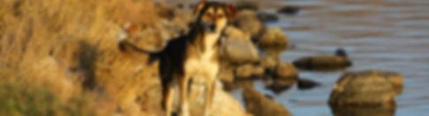Hundepsychologe Magdeburg, Hund schaut neugierig