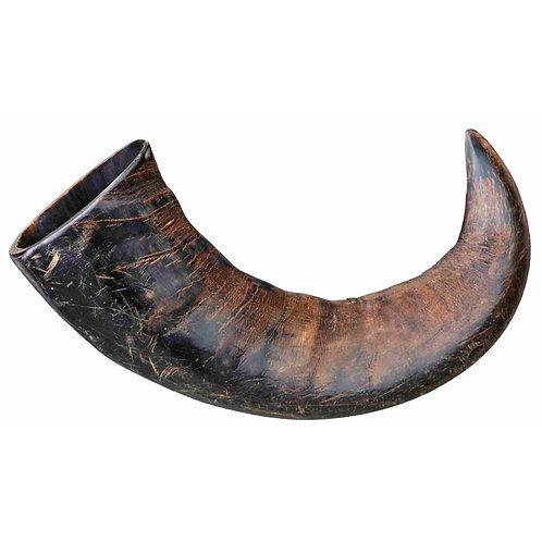 Corno de Bufalo para mascar