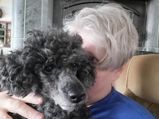 Eläintenhoitajan koirakoti