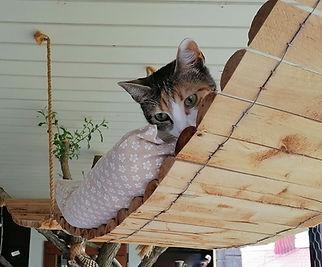 Metsoniemen kissahoitolassa kissolla on turvalliset terassit .