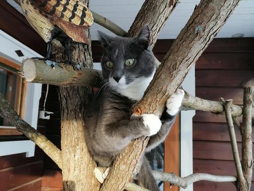 Suomen paras kissahoitola?