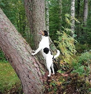 Metsoniemen Koirakoti