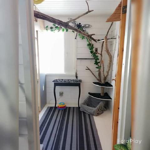 Miukula paras hoitopaikka kissallesi
