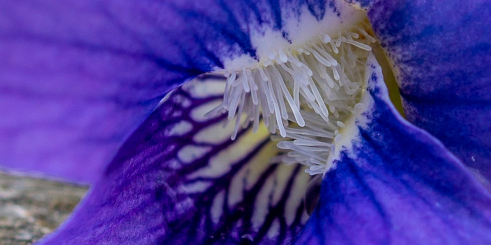 Macro Photography....what you need, how do you do it and an understanding