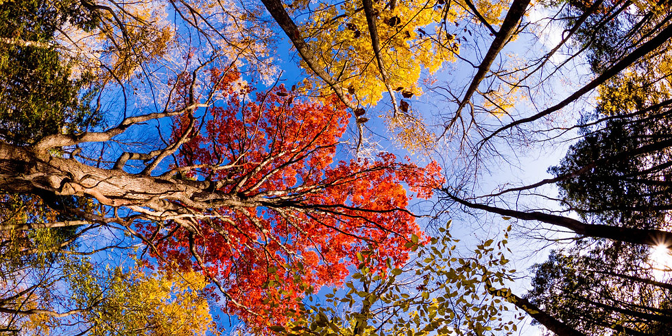FALL COLORS IN FOREST PARK - LEAVES ARE CHANGING FAST!