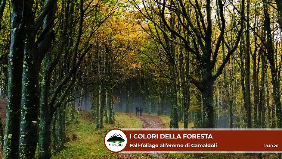 camaldoli_fol.jpg