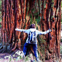 Le sequoie di Sammezzano arrivano fino a