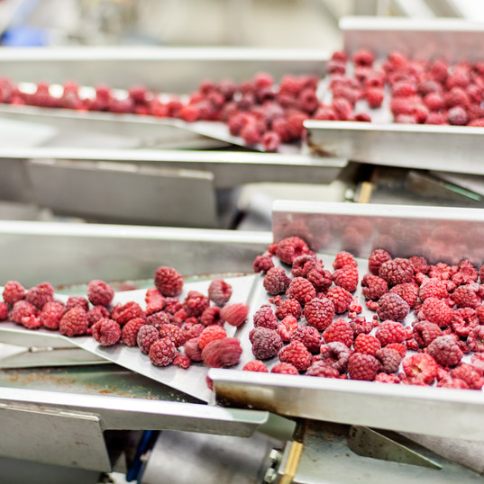 frozen red raspberries in sorting and pr