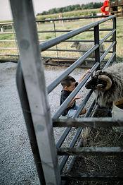 Steele Farms 2020-9458.jpg