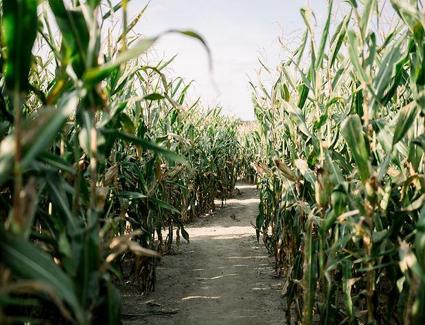 Steele Farms 2020-9488.jpg