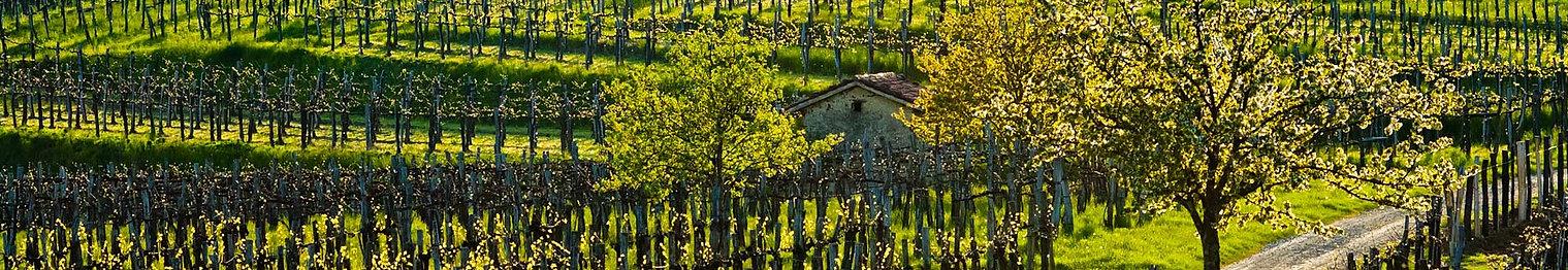 marijan-mocivnik-vinogradi-slap-2264-192
