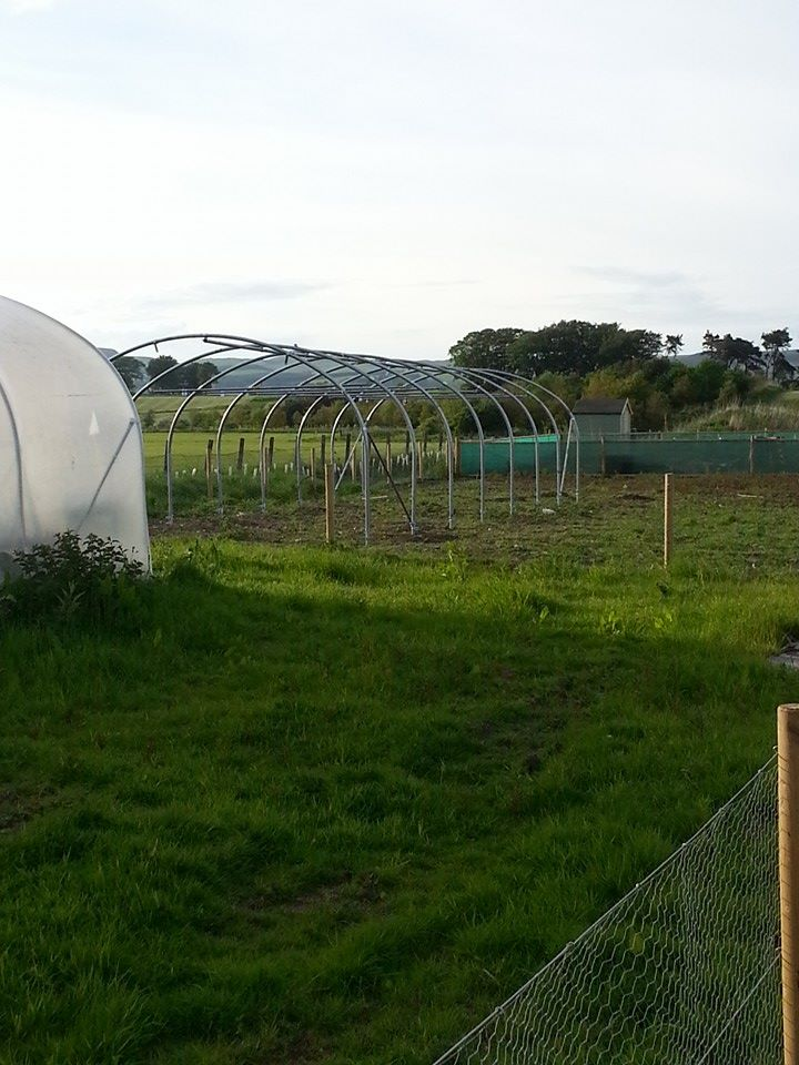 Polytunnel in progress