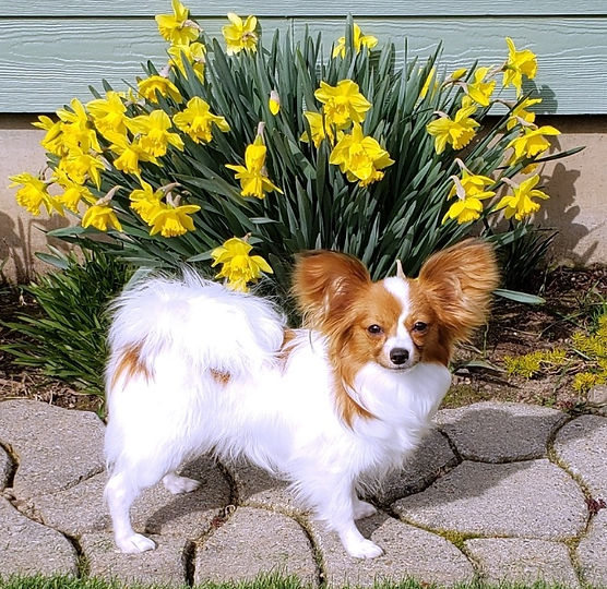 Winnie daffodils.jpeg