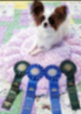 04062019 PCD title and RA 1st leg perfec