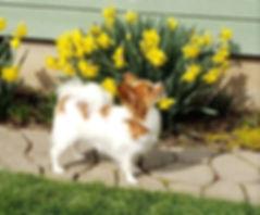 Winnie daffodils 2.jpeg