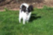 roxie as pup.jpg