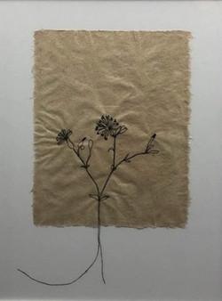 Flor de Alface