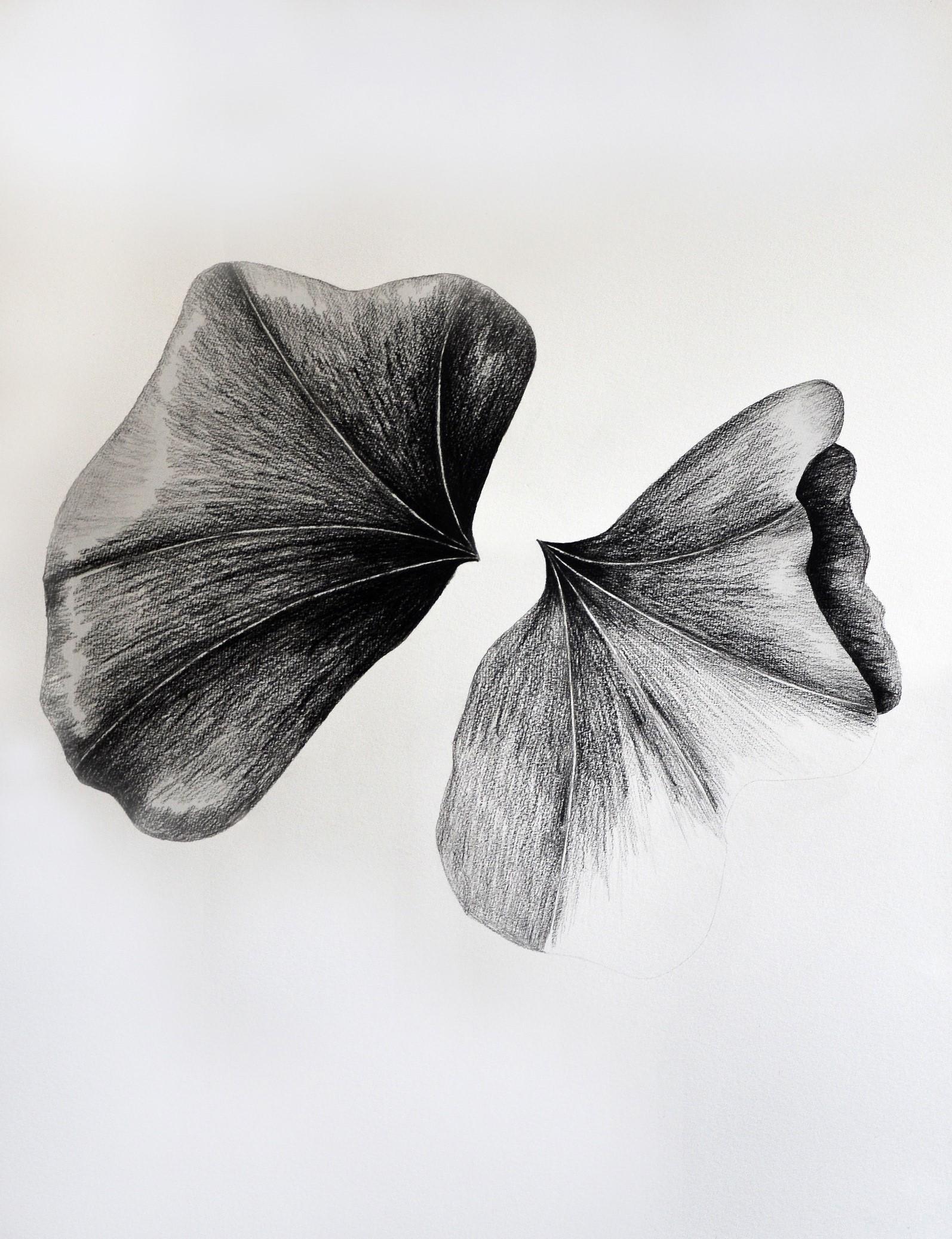 Duas folhas