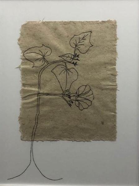Flor de Batata Doce