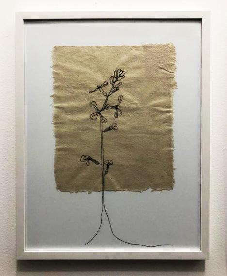 Flor de Rúcula