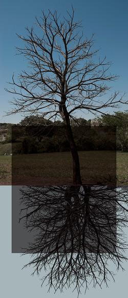 Árvores Duplas