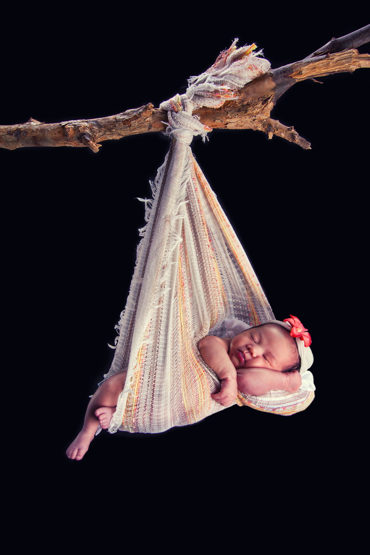 Hanging Tree Branch