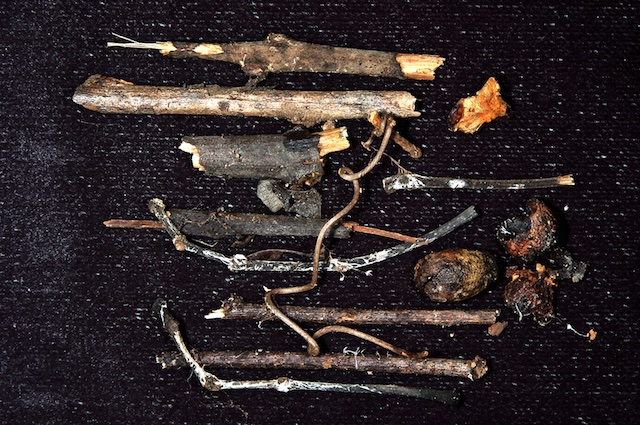 Micélio floresta | Mycelium forest