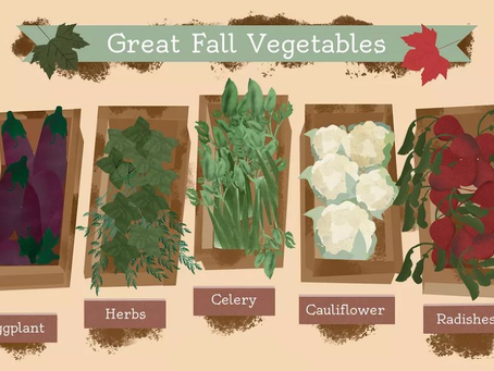 Great Fall Vegetable Chef J9 Chooses For Your Health