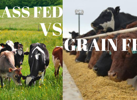 Know Your Beef! Grass- vs Grain-fed