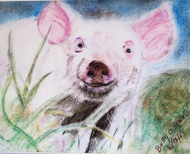 #11 Little Pig