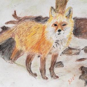 #9 The Fox