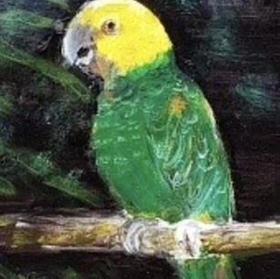 #7 The Parrot