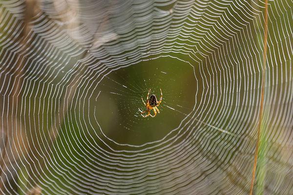 spindelnät.jpg